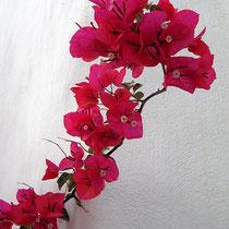 Knallige Blüte