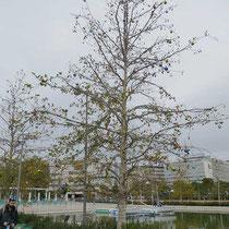 Geschmückter Baum am Kanal