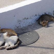 Amorgos: Faule Katzen