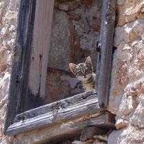 Chalki: Kätzchen