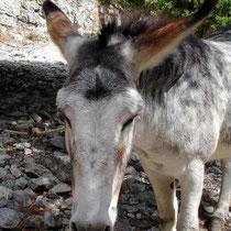 Kretas letzter Esel?