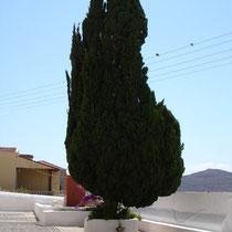 Chalki: Hier gibt es die schönsten Zypressen