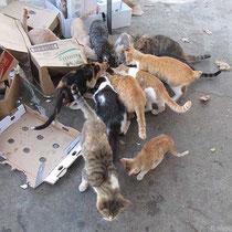 Ein Fressen für die Katz