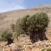 Kreta: Bei Lykos-Strand