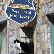 Hoffentlich bringen die Fischer was mit!
