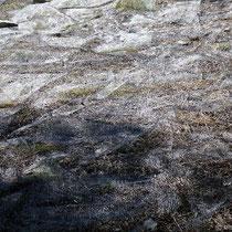 Netze für Olivenernte