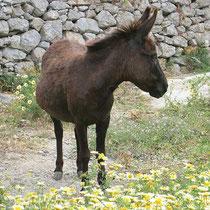 Freundlicher Esel