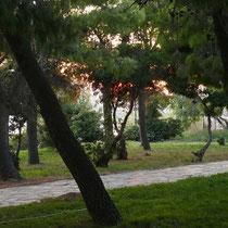 ... unter Bäumen