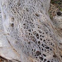 Kaktusruine