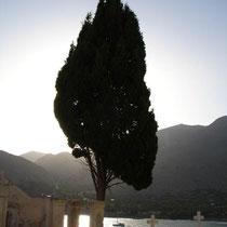 Chalki: Zypresse am Friedhof von Emborio