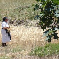 Karpathos: Landarbeit bei Avlona