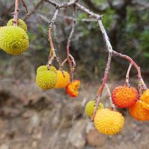 ... und Früchte