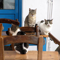Erwartungsvolle Katzen