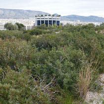 Blick über den Park: Nachbargebäude mit Dachgarten