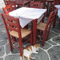 Fette Katze