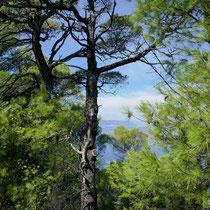 Hellgrün ist die Farbe von Skopelos