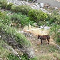 Karpathos: In den Gärten von Olymbos