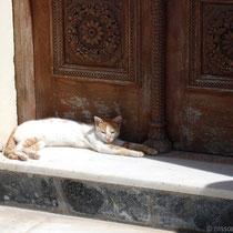 Karpathos: Katze vor der Kirchen