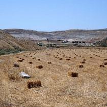 Die Landwirtschaft ist gar nicht so klein auf Milos