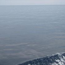 Meer ohne Delphine