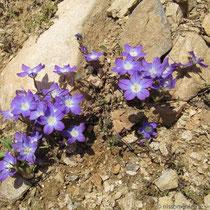 mir unbekannte Blumen
