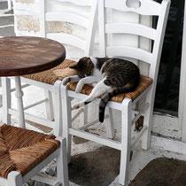 Müde Katze