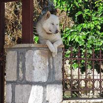 Freundlicher Hund in Vonitsa