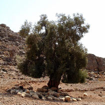 Kreta: Schetten!