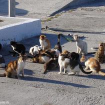 Ein Fressen für die Katzen!