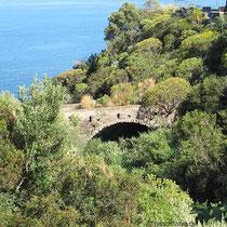 Brücke für Pflanzen