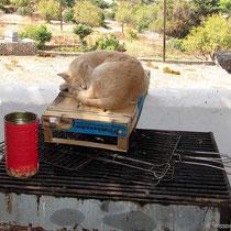 Katze vom Grill
