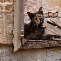 Kreta: Katzenblicke