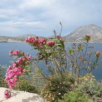 Thymena mit Oleander