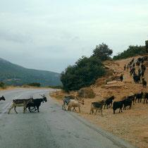 Viehwechsel