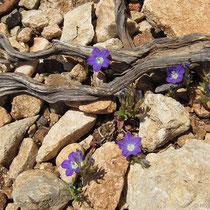 Blume versus Steine
