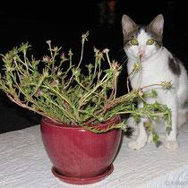 Ein Fressen für die Katze
