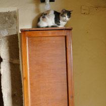 Katzen überall