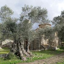 Und die schönen Olivenbäume