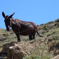Anafi: Und noch ein Esel