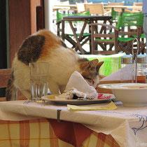Ein (schnelles) Fressen für die Katzen