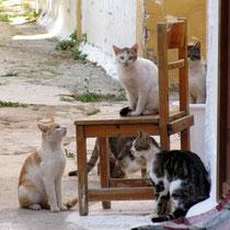 Noch mehr Katzen