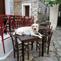 Hatten Sie den Hund bestellt?
