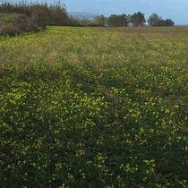 Wiese bei Rethymnon
