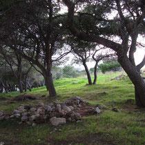 Mini-Wald am Eingang