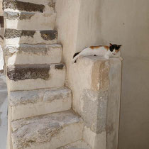 Entspannte Katze
