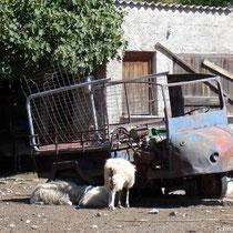 Kreta: Dreiradruine in Agia Roumeli - willkommener Schatten