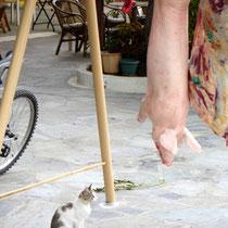 Kea. JKlein Fressen für Katzen...