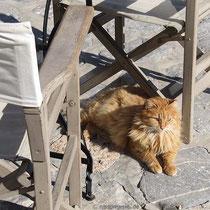 Typische Hydra-Katze