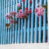 Freiheitliebende Blumen