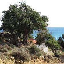 Wieder bei Agia Marina